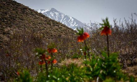 سپیدان سرزمین لاله های واژگون
