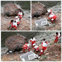 سقوط مرگبار سنگ 50تنی بر روی جستجوگر عتیقه +عکس