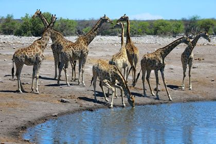 زیباییهای طبیعی حیاتوحش نامیبیا +عکس