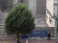 وزش باد شدید در تهران طی امشب