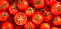 گوجهفرنگی؛ کیلویی چند!؟
