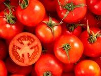 دستهای پنهان گرانی گوجه فرنگی