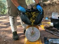 کشف 7کیلو پلاستیک از معده یک گوزن! +عکس