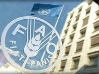 همکاری فائو با ایران علیرغم تحریمهای بینالمللی