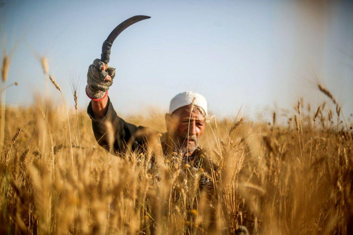 طرح خرید تضمینی دام عشایر و روستاییان تصویب شد