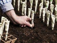 چگونه سرمایه شروع استارتآپ را تامین کنیم؟