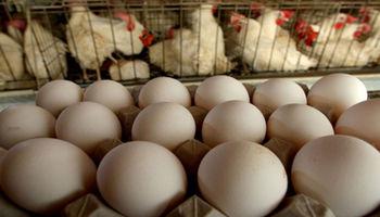 2 هزار و 500 تن؛ تولید روزانه تخم مرغ