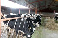 احتمال افزایش قیمت شیرخام در هفته آینده وجود دارد
