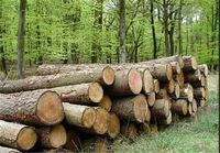 قاچاق چوب از جنگلها 48درصد افزایش یافت