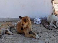خبرهای تکان دهنده از سگکشی شهرداری تهران!