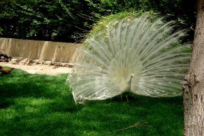 تصاویر زیبا از باغ پرندگان اصفهان +عکس