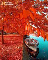 پاییز زیبای آمستردام +عکس