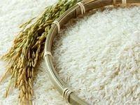 چرا برنج گران شد؟