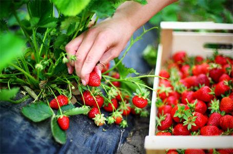 غذای ارگانیک، سالم یا طبیعی کدام بهتر است؟