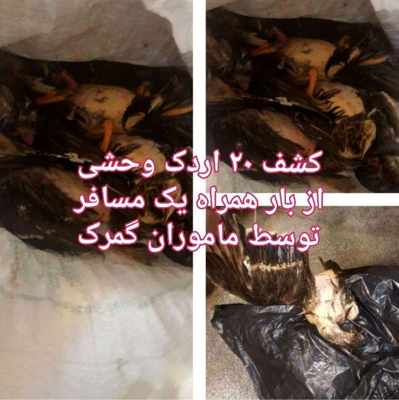 قاچاق اردک در گمرک شلمچه! +عکس