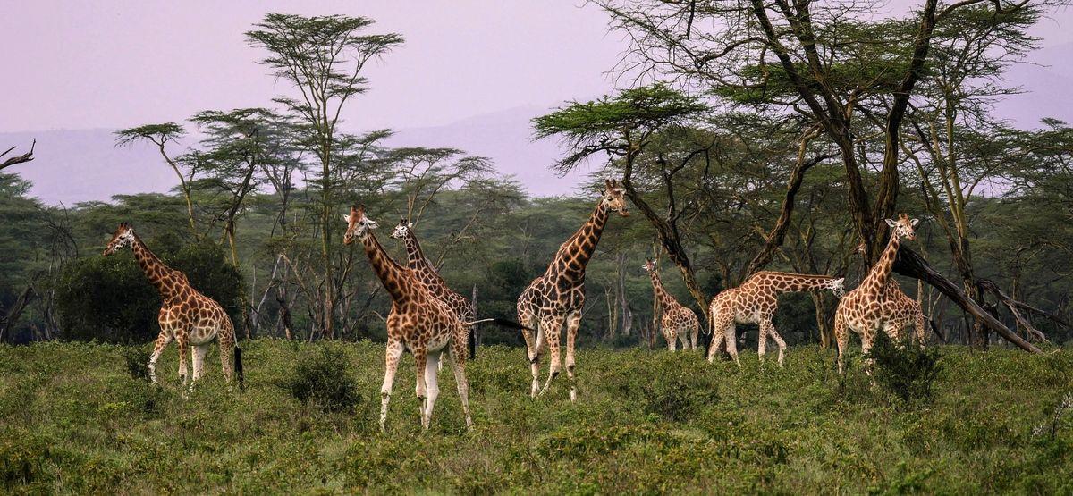 مقاصد برتر سافاری آفریقا را ببینید! +تصاویر