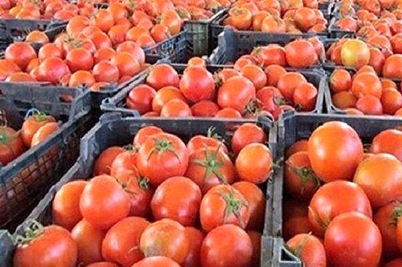 کاهش قیمت گوجه فرنگی از ۲۵آذر