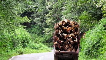 خالی شدن جنگلهای شمال از درون +عکس