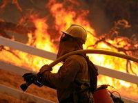 نجات کبوتر؛ اولین مأموریت آتشنشانی در سال جدید