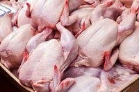 مشکل گرانی مرغ ربطی به تحریم ندارد