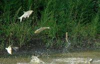 هجوم ماهیها به ایالت کنتاکی آمریکا