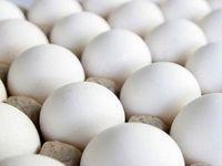 تخم مرغ شانهای چند؟