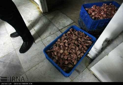 تصاویر تکان دهنده از کارخانه سوسیس