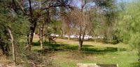 کاشت ۶۵هزار اصله درخت در محوطه جنگل کاری صد هکتاری