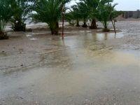 روزهای بارانی در جنوب سیستان و بلوچستان +فیلم