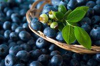 میوههای چربی سوز را بشناسید