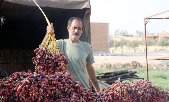 عرضه بیش از ۴۰۰هزار تن خرما در ماه رمضان