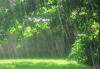 بارش باران در شمال کشور