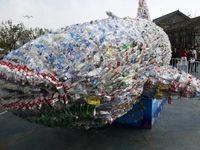 کثیفترین نهنگ دنیا +عکس