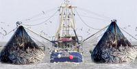 صید ترال متوقف میشود