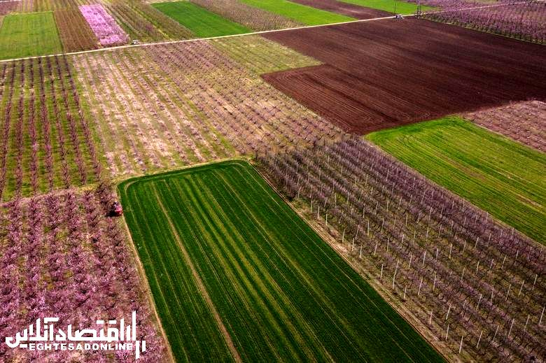 شکوفه های بهاری در جهان