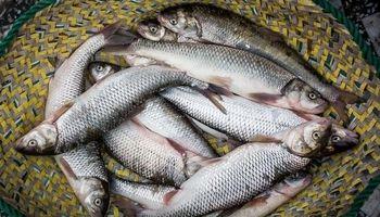 اختلال در سیستم توزیع، ماهی را گران کرد