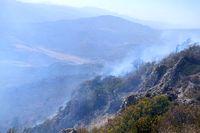 آتش جنگل های کردکوی خوابید