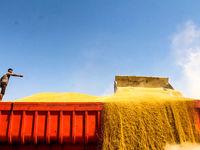 مجوز حجتی برای صادرات گندم و آرد