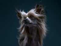 ژست دیدنی سگها مقابل دوربین عکاسی +تصاویر