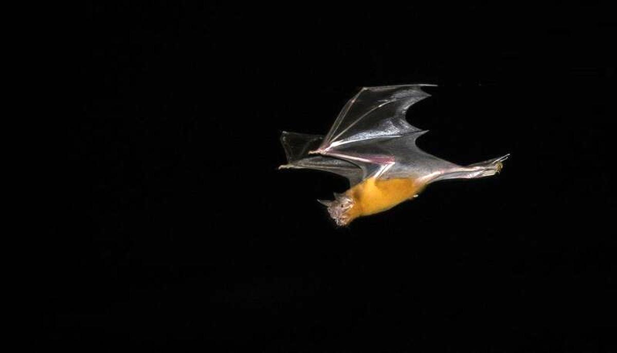 تصاویر خیره کننده از پرواز خفاش