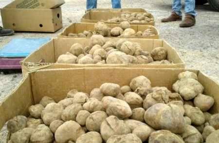 سرنوشت قارچهای کیلویی یک میلیون تومان