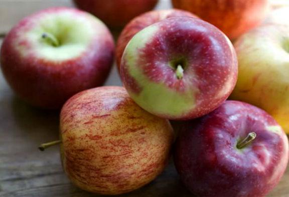 توزیع ۶۰هزار تن سیب و پرتقال شب عید از ۲۰اسفند/ آغاز خرید توافقی خرما از امروز