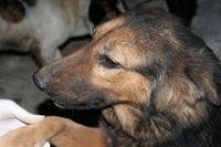 جنجال سگ کُشی در تبریز + عکس
