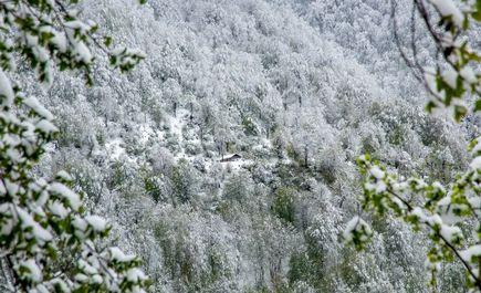 مازندران سفید پوش