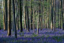 بهشت آبی رنگ بلژیک +تصاویر