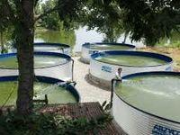 برنامهریزی برای پرورش ۲۰۰هزار تن ماهی در دریا تا پایان برنامه ششم توسعه