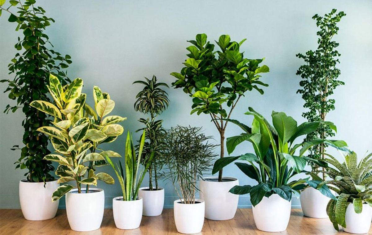 از وجود این ۸ گیاه در اطرافتان برای کاهش اضطراب غافل نشوید