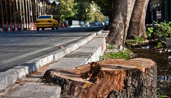 فاضلاب، پساب بیمارستانی و آب زیاد؛ عامل گندیدن ریشههای درختان ولیعصر/ احتمال قطع جریان 24ساعته آب در حاشیه خیابان
