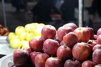 ۲۳هزار تن؛ ذخیره سازی سیب برای شب عید