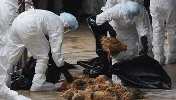 ۹۰درصد آنفلوآنزای طیور در آبانماه کمتر شد